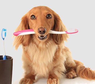 pet-care setting